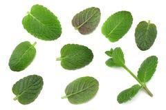 Чеканьте зеленые растения изолированные на белой предпосылке, свойства лист пипермента ароматичные сильных зубов Стоковая Фотография RF