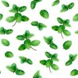 Чеканьте картину специи травы безшовную на белой предпосылке Стоковая Фотография RF
