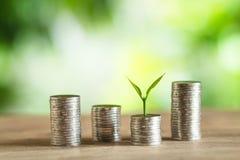 Чеканьте кучи денег деревьев монеток на куче денег Стоковое Фото