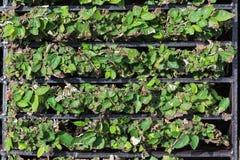Чеканьте расти вне через взгляд сверху гриля стока Стоковое Изображение