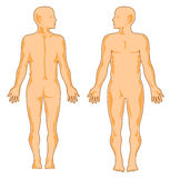человек анатомирования Стоковое фото RF