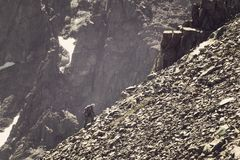 Человек взбираясь крутая гора Хорошее изображение для фото приключения, схватки и истории успеха Альпинизм дилетанта против голуб стоковые фотографии rf
