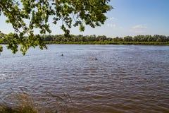 Человек водит здоровый образ жизни и заплывы в реке стоковая фотография