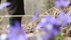 Человек выкапывает вне цветки весны от леса акции видеоматериалы