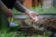 Человек выкапывает землю с лопаткоулавливателем Стоковое Изображение