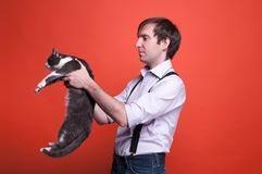 Человек в рубашке держа серого кота на протягиванных оружиях стоковое изображение