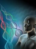 человек генома Стоковое Изображение RF