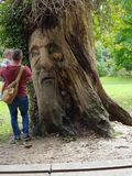 Человек дерева стоковое фото rf