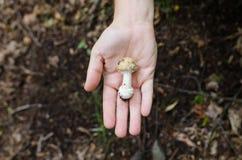 Человек держа в его грибах ладони - сцена осени от Европы стоковое фото rf