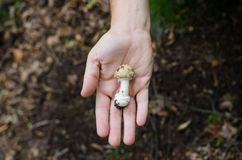 Человек держа в его грибах ладони - сцена осени от Европы стоковая фотография rf