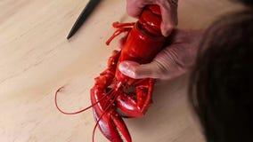 Человек держа кипеть омара на руках стоковые фотографии rf