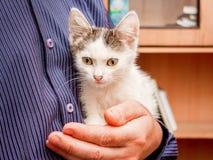 Человек держит на его руках небольшого белого запятнанного котенка с большими выразительными глазами стоковые изображения
