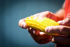 Человек есть кипеть мозоль Кукурузный початок после укуса стоковая фотография rf