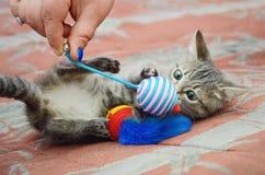 Человек играет с милым котенком стоковое фото rf