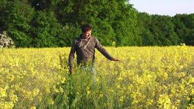 Человек идет вниз с луга среди wildflowers, желтых цветков в сельской местности видеоматериал