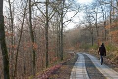 Человек идя вниз с европейского леса в осени стоковое изображение rf