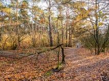 Человек идя с собаками на пути с упаденными листьями в последней осени стоковые изображения rf