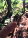 Человек и бабочка стоковое фото