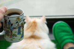 Человек и его кот cit на балконе и взгляд на окне стоковые изображения