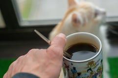 Человек и его кот cit на балконе и взгляд на окне стоковые фотографии rf