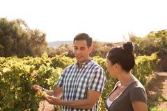 Человек и женщина в вскользь одежде в винограднике Стоковые Фотографии RF