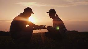 Человек и женщина 2 фермеров работают в поле Они изучают всходы завода, используют таблетку городок захода солнца sim гор ural Стоковые Изображения