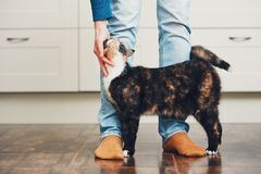 Человек и милый кот Стоковые Изображения RF