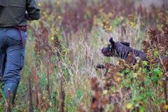 Человек и собака охотясь 2 Стоковые Фотографии RF