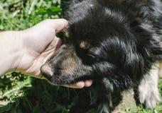 Человек и собака Стоковые Фотографии RF