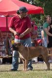 Человек и собака Стоковые Изображения RF