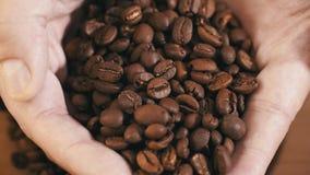 Человек комплектует вверх крупный план кофейного зерна пригорошни от arabica 4K плиты полностью очень вкусного сток-видео