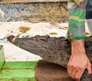 человек крокодила задвижки пресноводный Стоковые Фотографии RF