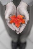 человек листьев дела Стоковые Изображения