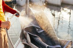 Человек моет сложенное ветрило на шлюпке или яхте в порте Стоковое Изображение