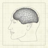 человек мозга Иллюстрация штока