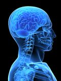 человек мозга Стоковое Изображение RF