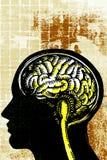 человек мозга Стоковая Фотография