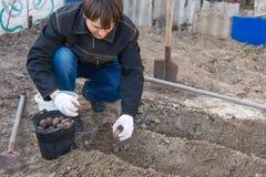 Человек на даче для того чтобы засадить картошки Стоковые Фотографии RF