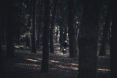 Человек на ездах мотоцикла в древесинах между деревьями Свет и тень E стоковая фотография rf