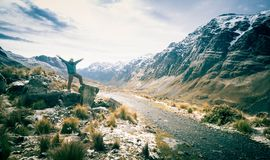 Человек на огромных камнях смотря долину среди скалистого ряда Анд стоковая фотография