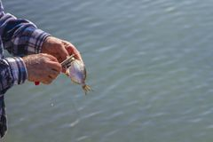 Человек очищает рыб на пристани Стоковое Фото