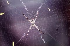 Человек паука Webby стоковое изображение rf