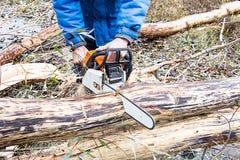 Человек пилит ствол дерева пилы нефти Стоковая Фотография RF