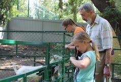 Человек посетителей людей   Ñ Ñ€ÑƒÑ  Ñ и 2 девушки смотрят коз в paddock на ферме стоковое фото