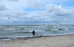Человек принимает янтарь в Балтийском море, Литве Стоковое Фото