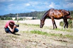 Человек принимая фото коричневой дикой лошади Стоковое Изображение RF