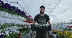 Человек принимая цветки в клети сток-видео
