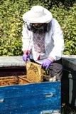 Человек работает в пасеке собирая мед пчелы Стоковое Фото