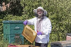 Человек работает в пасеке собирая мед пчелы Стоковая Фотография RF