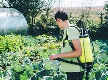 Человек распыляя сад стоковые фото